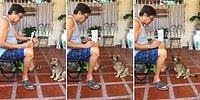 İnsan Dostunun Gösterdiği Sayılara Havlayarak Cevap Veren Sevimli Köpek