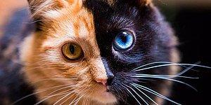 Karakterin Bir Kedi Olsa Hangi Cins Olurdu?