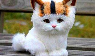 Kedi İsimleri Arayanlar İçin 50 Harika Öneri 😻