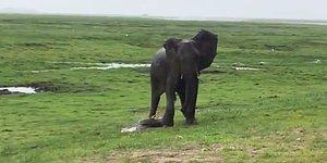 Yeni Doğan Yavruyu Korumak İçin Başına Toplanan Fillerin Muhteşem Görüntüsü