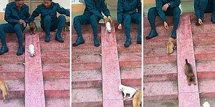 Dünyanın En Güzel Görüntüleri Olabilir: Yavru Köpeklerin Koşarak Kaymaya Gittiği Muhteşem Anlar