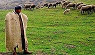 Tası Tarağı Toplayıp Tabiatla Buluşmak İsteyenlere Güzel Haber: 6 Bin Liraya Çalışacak Çoban Bulunamıyor