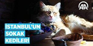 Dünyanın En Kalabalık Şehirlerinden İstanbul'un Sokak Kedileri