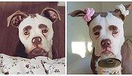 Sosyal Medyanın En Mutsuz Köpeğiyle Tanışın!