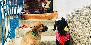 Boncuk ve Çikilata'ya Annelik Yapan, Kalbi Hayvan Sevgisiyle Dolu Güzel İnsan: Hatçe Anne