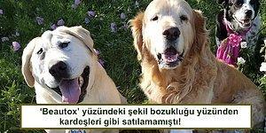 Farklı Bir Yüzü Olduğu İçin Terk Edilen Köpeciğin Sahiplenilince Geçirdiği Yürek Isıtan Değişim