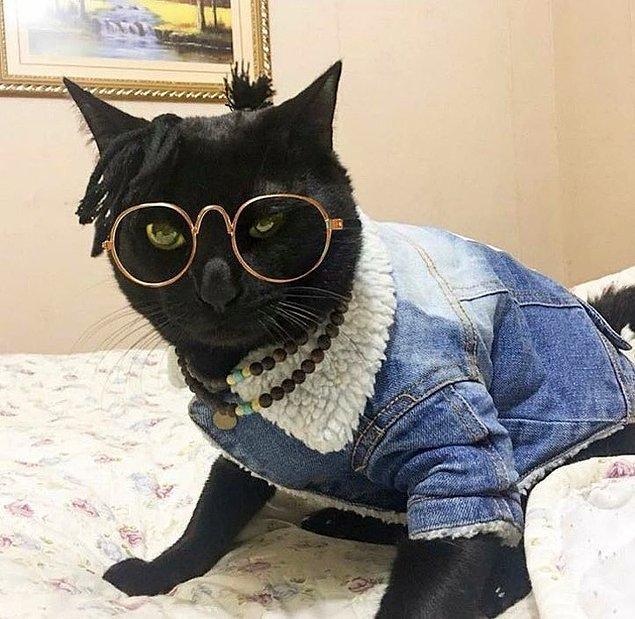 11. Aşırı coolluktan ödün vermeyen kara kedi 🐈