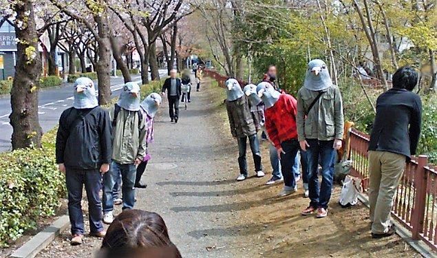 18. Japonya'da güvercinler nasıl oluyor merak ediyor musunuz?