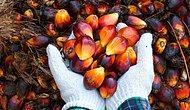Uzmanlar Uyardı: 'Palm Yağı Kanserin Çok Daha Hızlı Yayılmasına Neden Oluyor!'