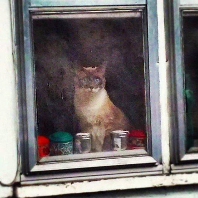 23. Kötü bir kamera ve kirli bir cam ile çekilen, resimden farkı olmayan kedi fotoğrafı