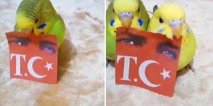 Dünyanın En Güzel Videosu: Vatansever Muhabbet Kuşları