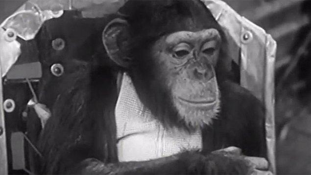 Fakat bu çaba da başarıyla sonuçlanmadı. Elindeki tüm şempanzeler ölünce deneylerini sonlandırmak zorunda kaldı.