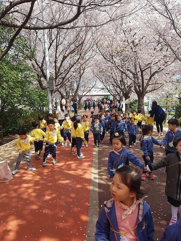 6. Tün anaokulları farklı renklerde üniformalar giyer ve böylelikle çocuklar geziler sırasında kaybolmaz.