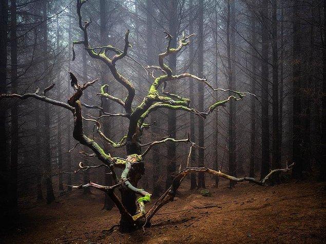 22. Bu ağaç muhtemelen ormandan geçerken yenmeniz gerekecek canavarlarla ilgili tüm sırları saklıyordur