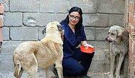 Ölmek Üzere Olan Sokak Köpeklerine Yeni Bir Hayat Sunan Mükemmel İnsan: Funda Küçük