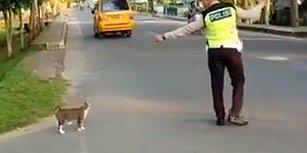 Kediyi Karşıya Geçirmek İçin Trafiği Durduran Trafik Polisi