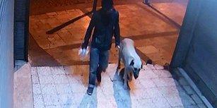 Denizli'de Sokak Köpeği Tecavüze Uğrayıp Öldürülmüştü: Şüpheli Gözaltına Alındı