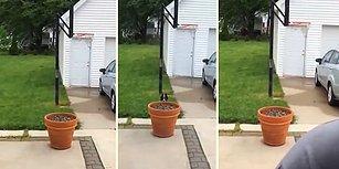 Dışarıda Daha Fazla Vakit Geçirmek İçin İnsan Dostundan Saklanan Minnoş Köpek