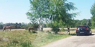 Safari Parkında Araçlarından İnip Çocuklarıyla Birlikte Çitaların Arası Dalan Yürek Yemiş Aile