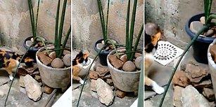 Eli Sopalı Adam ile Kedi Tarafından Köşeye Sıkıştırılan Farenin Efsane Kaçışı