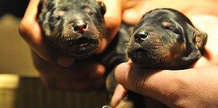 Yolda Buldukları Hayvanı İki Sene Boyunca Köpek Zannederek Besleyen Aile