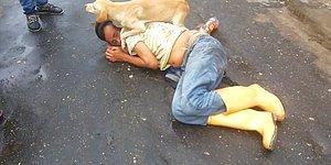 Yerde Yatan İnsan Dostunun Yanına Kimseyi Yanaştırmayan Köpek