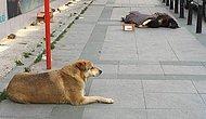 Bana Hüznün Fotoğrafını Çekebilir misin Abidin? Taksim'de Köpeğe Sarılarak Uyuyan Çocuk