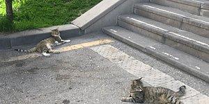 #hacettepedehayvancinayeti: Beytepe Kampüsü'nde İki Kedi Beşinci Kattan Aşağı Atıldı