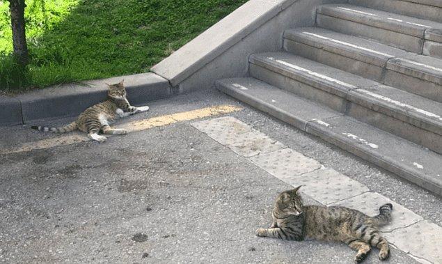 Ancak aşağı atıldığı iddia edilen kedilerden Şükufe, ciğerinin patlaması ve iç kanama nediyle hayatını kaybetti.
