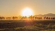 Güzel Atlar Ülkesi Anlamına Gelen Kapadokya'dan Adına Yaraşır At Fotoğrafları!
