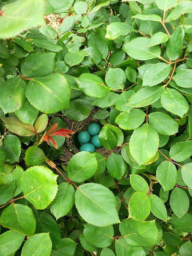 23. Gül bahçesindeki sürpriz.