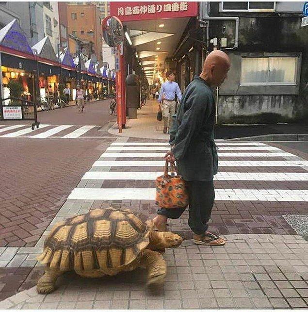 4. Asyalı kaplumbağa terbiyecisi değil mi o?
