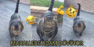 """Yan Bakana Dayak Atıyor! İnternetin Yeni Fenomeni """"Vücut Çalışan Kedi"""""""