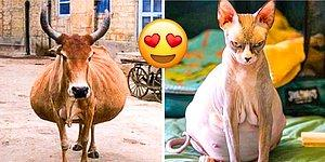 Hayvanların Doğumdan Hemen Önceki Hallerine Dair Birbirinden Büyüleyici 24 Kare