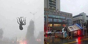 Çin'de Yaşanan Şiddetli Fırtınada Gökyüzünden Deniz Canlıları Yağdı İddiası