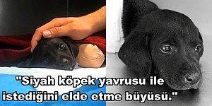Kan Donduran Bir İhtimal... Küçük Köpeciğin Patileri Kara Büyü Yapmak İçin mi Kesildi?