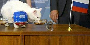 Ahtapot Paul'ün Anısına Saygıyla: Dünya Kupası'nın Bu Yılki Kahini Kedi Aşil ile Tanışın!