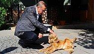 Meclis'e Sunulmuş ve AKP Tarafından Reddedilmişti: Erdoğan 'Hayvanları Koruma Kanunu' İçin Seçim Sonrasını İşaret Etti
