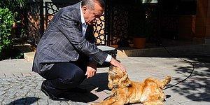 Meclise Sunulmuş ve AKP Tarafından Reddedilmişti: Erdoğan 'Hayvanları Koruma Kanunu' İçin Seçim Sonrasını İşaret Etti