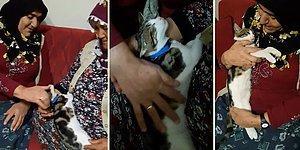 Kediyi Sevgi Yumağı Haline Getiren Teyzelerin Tekrar Tekrar İzleyeceğiniz Muhteşem Anları