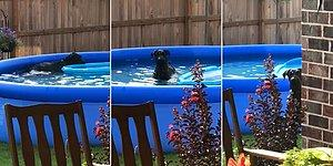 Evin Bahçesindeki Oyun Havuzunda Gizlice Oynayan Köpeğin İnsan Dostuna Yakalandığı Anda Yaşadığı Şok