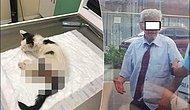 Nereye Gidiyorsun Türkiye? Kediye Tecavüz Eden Şahıs Tutuklandı