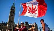 Senato Kabul Etti: Kanada'da Esrarın Keyif Amaçlı Kullanımı Artık Yasal