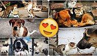 Hayvan Hakları Konusundaki Durumumuz Ortada, Peki Diğer Dünya Ülkeleri Ne Alemde?