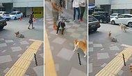 Adana'nın Kedisinin Bile Psikopat Olduğunu Kanıtlayan Görüntüler