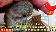 Kaş Yapayım Derken Göz Çıkarmayın! Yavru Bir Kuş Bulduğunuzda Yapmanız Gerekenleri Söylüyoruz