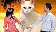 Dosta Düşmana Herkese Korku Veren Psikopat Kediye Yapılmış 15 Komik Photoshop