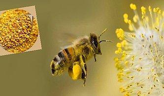 Her Yaptığı Mucizevi Olan Bal Arılarının Polenlerini Tüketmeniz İçin 10 Harika Sebep