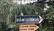 İstanbul Üniversitesi Bünyesindeki Şehrin İlk ve Tek Botanik Bahçesi Müftülük İçin Tahliye Ediliyor...