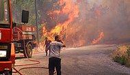 Ormanlar Kül Oldu ve Faili Meçhul Kaldı: 2017'de Çıkan Yangınların Yarısının 'Nedeni Belirlenemedi'